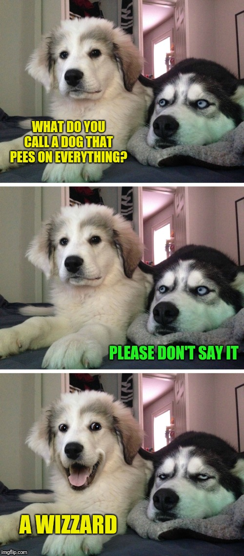 Bad pun dogs | WHAT DO YOU CALL A DOG THAT PEES ON EVERYTHING? PLEASE DON'T SAY IT A WIZZARD | image tagged in bad pun dogs,44colt,puns | made w/ Imgflip meme maker