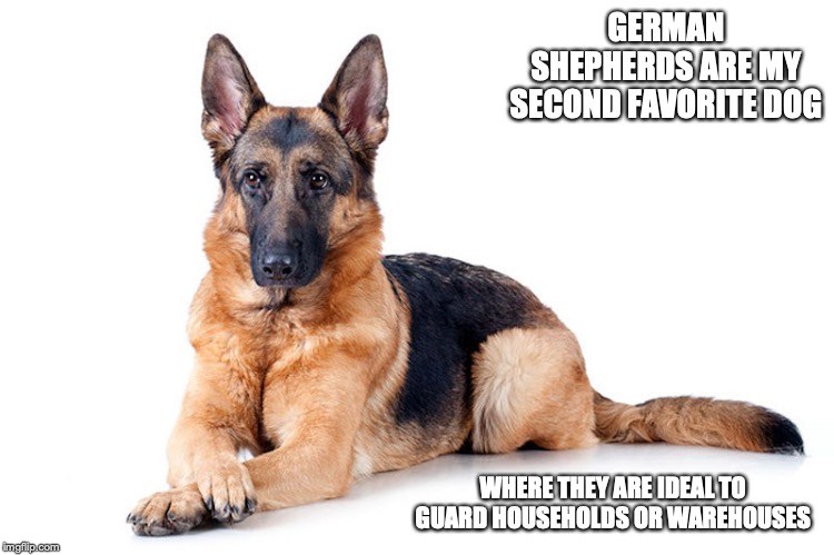 German Shepherd | GERMAN SHEPHERDS ARE MY SECOND FAVORITE DOG WHERE THEY ARE IDEAL TO GUARD HOUSEHOLDS OR WAREHOUSES | image tagged in german shepherd,dog,memes | made w/ Imgflip meme maker