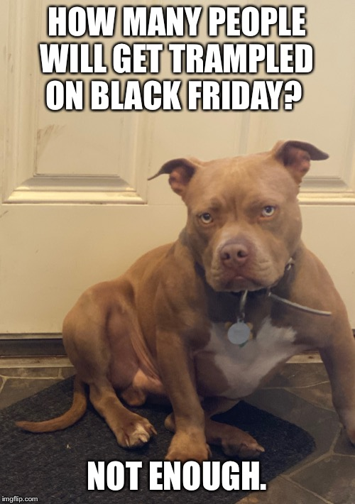 Grumpy Dog |  HOW MANY PEOPLE WILL GET TRAMPLED ON BLACK FRIDAY? NOT ENOUGH. | image tagged in grumpy dog | made w/ Imgflip meme maker