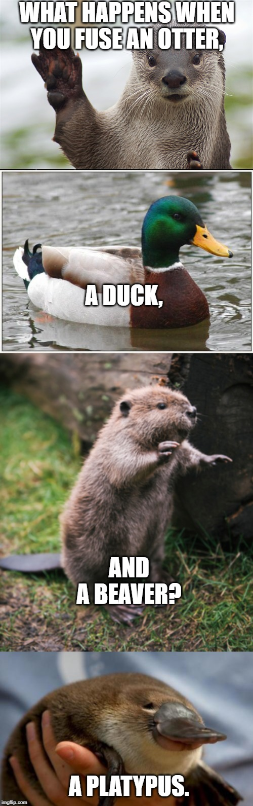 Thanks, god. | WHAT HAPPENS WHEN YOU FUSE AN OTTER, A DUCK, AND A BEAVER? A PLATYPUS. | image tagged in memes,actual advice mallard,beaver,welcome back otter,platypus | made w/ Imgflip meme maker