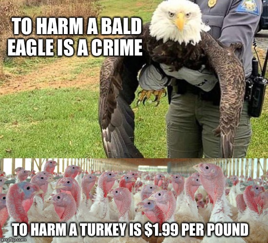 Happy thanksgiving! | TO HARM A BALD EAGLE IS A CRIME TO HARM A TURKEY IS $1.99 PER POUND | image tagged in bald eagle,turkey,thanksgiving,vegan,vegans do everthing better even fart | made w/ Imgflip meme maker