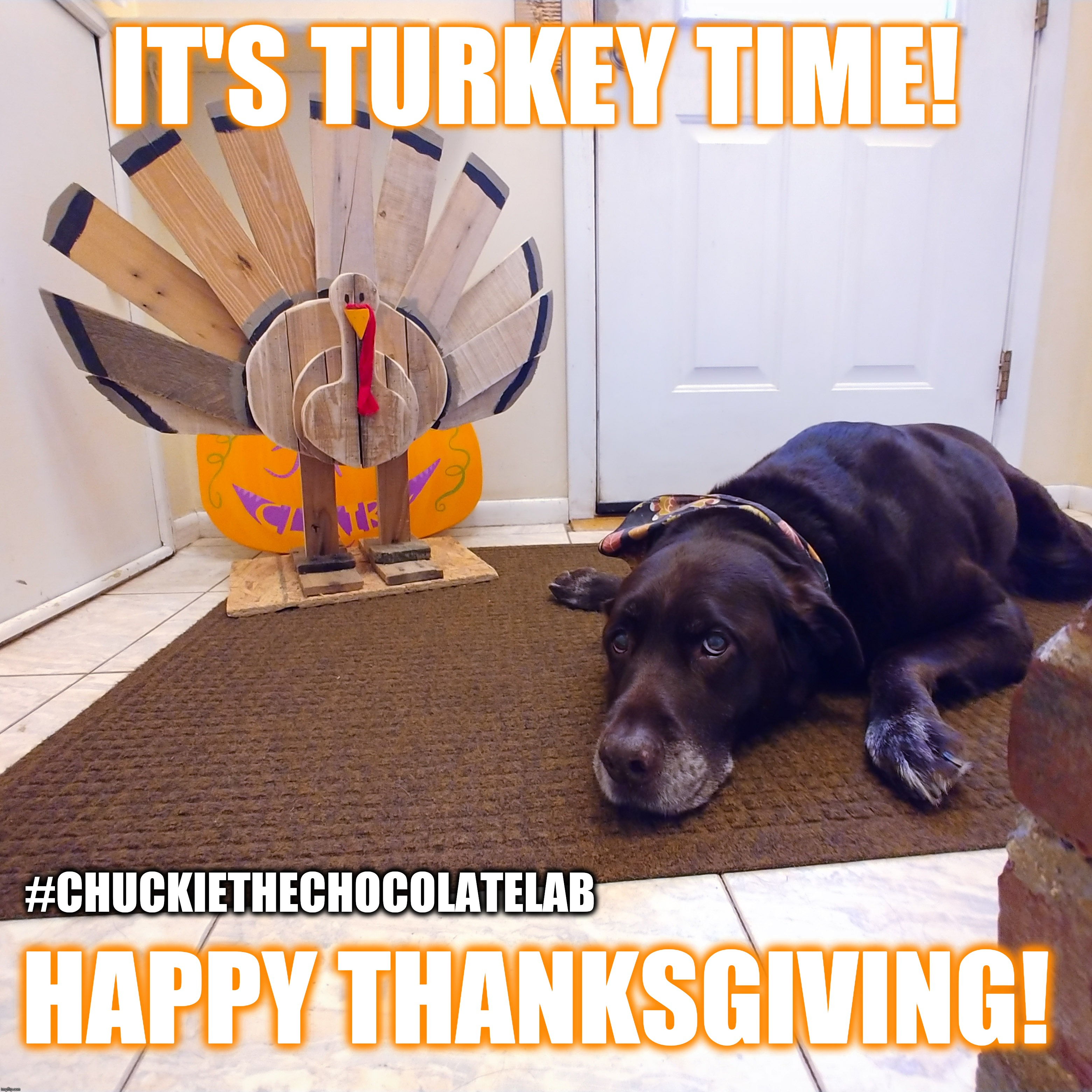It's Turkey Time! | IT'S TURKEY TIME! HAPPY THANKSGIVING! #CHUCKIETHECHOCOLATELAB | image tagged in chuckie the chocolate lab,dogs,memes,funny,thanksgiving,turkey | made w/ Imgflip meme maker