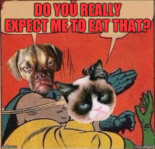 Grumpy Dog Slapping Grumpy Cat | DO YOU REALLY EXPECT ME TO EAT THAT? | image tagged in grumpy dog slapping grumpy cat | made w/ Imgflip meme maker