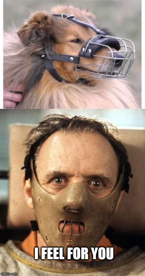 I FEEL FOR YOU | image tagged in hannibal lecter,muzzle | made w/ Imgflip meme maker
