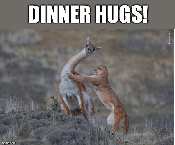 Dinner hugs | DINNER HUGS! | image tagged in predator prey,dinner,memes,funny | made w/ Imgflip meme maker