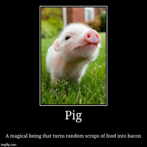 Pig | A magical being that turns random scraps of food into bacon | image tagged in funny,demotivationals | made w/ Imgflip demotivational maker