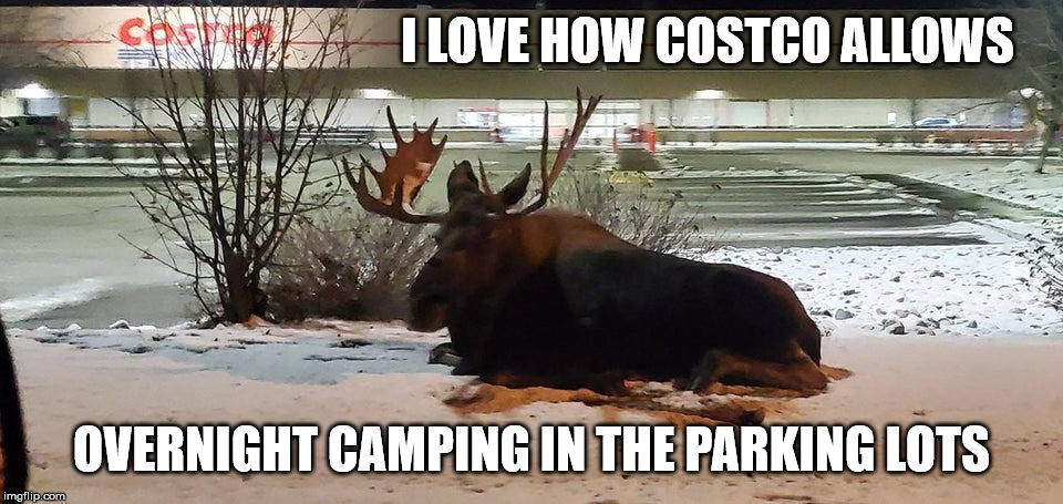 Herd about this | I LOVE HOW COSTCO ALLOWS OVERNIGHT CAMPING IN THE PARKING LOTS | image tagged in moose,costco,camping,overnight,parking lot | made w/ Imgflip meme maker