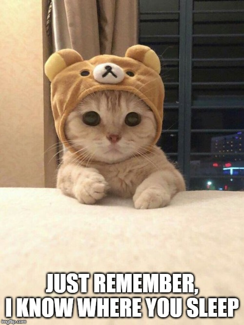 Sad Cat | JUST REMEMBER, I KNOW WHERE YOU SLEEP | image tagged in cats | made w/ Imgflip meme maker