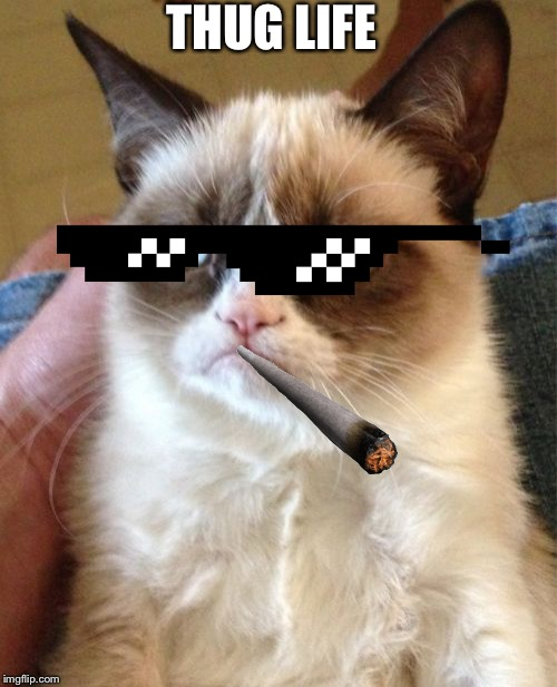 Grumpy Cat | THUG LIFE | image tagged in memes,grumpy cat | made w/ Imgflip meme maker
