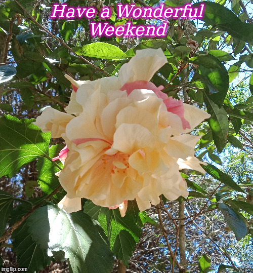 Have a Wonderful Weekend |  Have a Wonderful Weekend | image tagged in flowers,good morning,weekend,good morning flowers,memes | made w/ Imgflip meme maker