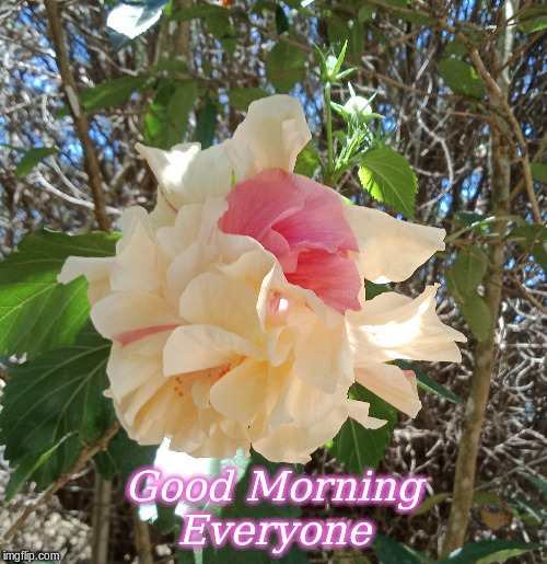 Good Morning Everyone |  Good Morning Everyone | image tagged in memes,good morning,good morning flowers,flowers | made w/ Imgflip meme maker