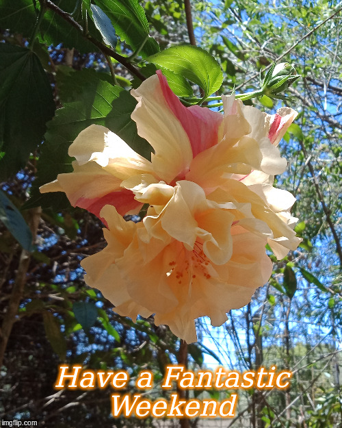 Have a Fantastic Weekend |  Have a Fantastic Weekend | image tagged in memes,flowers,good morning,good morning flowers | made w/ Imgflip meme maker