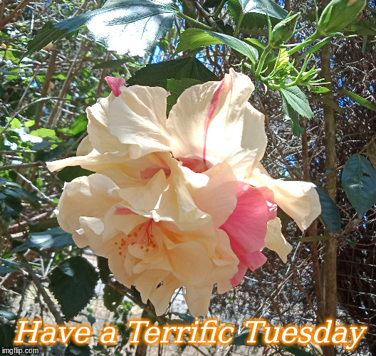 Have a Terrific Tuesday |  Have a Terrific Tuesday | image tagged in memes,tuesday,good morning,flowers,good morning flowers | made w/ Imgflip meme maker