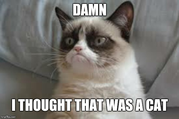 Grumpy cat | DAMN I THOUGHT THAT WAS A CAT | image tagged in grumpy cat | made w/ Imgflip meme maker