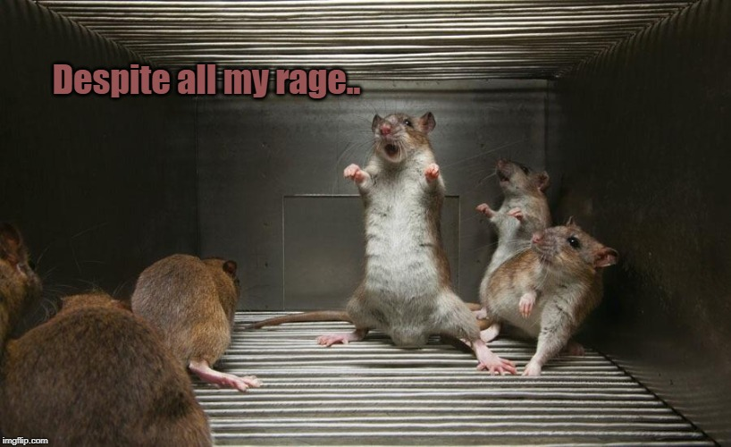rat in a cage | Despite all my rage.. | image tagged in rats | made w/ Imgflip meme maker