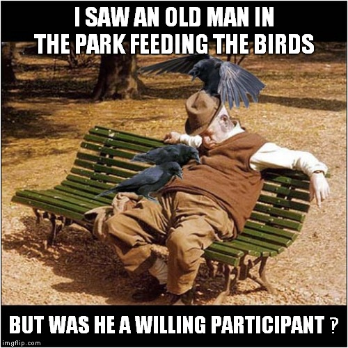 Feeding The Birds ‽ | I SAW AN OLD MAN IN THE PARK FEEDING THE BIRDS BUT WAS HE A WILLING PARTICIPANT ‽ | image tagged in fun,crows,birds | made w/ Imgflip meme maker