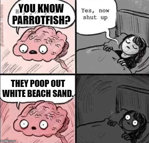 waking up brain | YOU KNOW PARROTFISH? THEY POOP OUT WHITE BEACH SAND. | image tagged in waking up brain | made w/ Imgflip meme maker