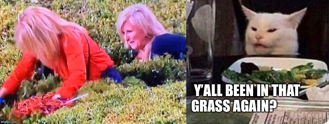 You in the grass Auburn fan |  Y'ALL BEEN IN THAT                                                       GRASS AGAIN? | image tagged in auburn,ironbowl,weed,grass,cat,woman yelling at cat | made w/ Imgflip meme maker