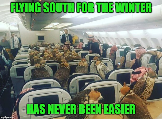 FLYING SOUTH FOR THE WINTER; HAS NEVER BEEN EASIER | image tagged in memes,falcons,united arab emirates | made w/ Imgflip meme maker
