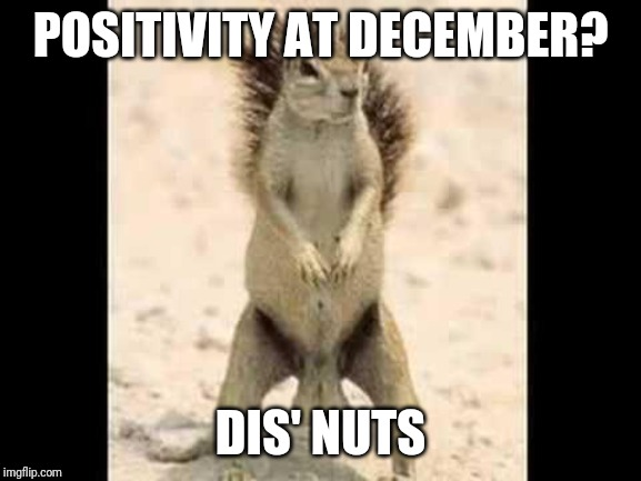 Squirrel nuts | POSITIVITY AT DECEMBER? DIS' NUTS | image tagged in squirrel nuts | made w/ Imgflip meme maker