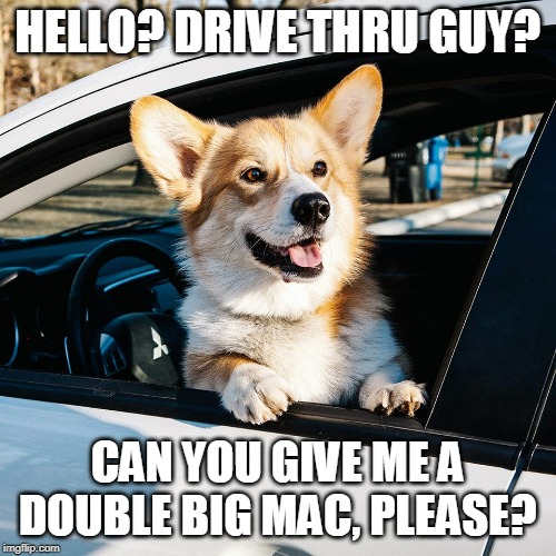 HELLO? DRIVE THRU GUY? CAN YOU GIVE ME A DOUBLE BIG MAC, PLEASE? | image tagged in drive thru dog | made w/ Imgflip meme maker
