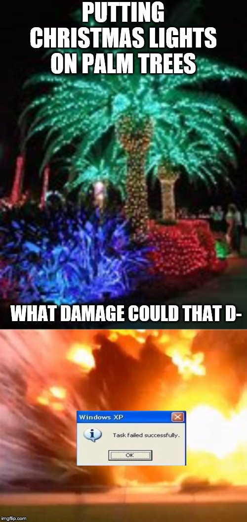 PUTTING CHRISTMAS LIGHTS ON PALM TREES WHAT DAMAGE COULD THAT D- | made w/ Imgflip meme maker