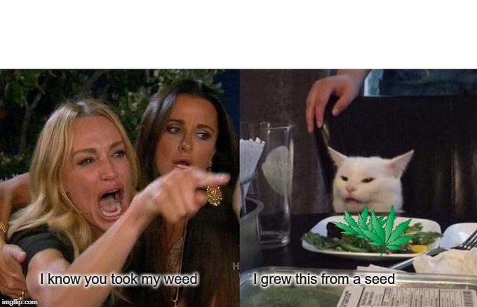 Woman Yelling At Cat Meme | I know you took my weed I grew this from a seed | image tagged in memes,woman yelling at cat | made w/ Imgflip meme maker