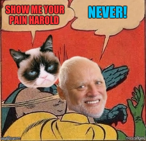 Not even grumpy can make him crack | SHOW ME YOUR PAIN HAROLD NEVER! | image tagged in memes,grumpy cat,hide the pain harold,44colt,grumpy slaps harold,batman slapping robin | made w/ Imgflip meme maker