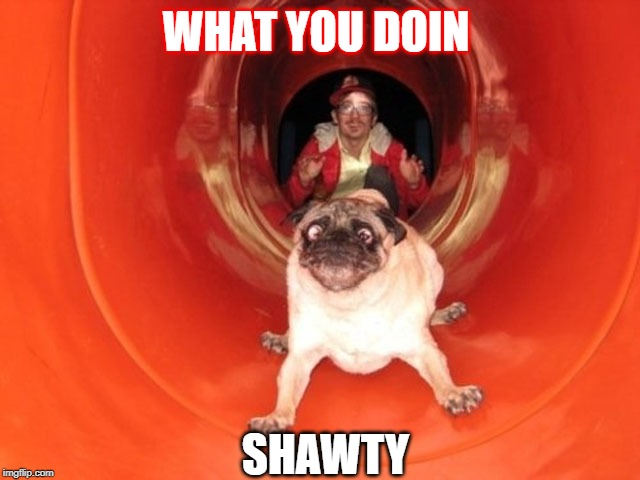 Dog Slide | WHAT YOU DOIN SHAWTY | image tagged in dog slide | made w/ Imgflip meme maker