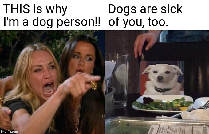 Woman Yelling At Cat Meme | THIS is why I'm a dog person!! Dogs are sick of you, too. | image tagged in memes,woman yelling at cat | made w/ Imgflip meme maker