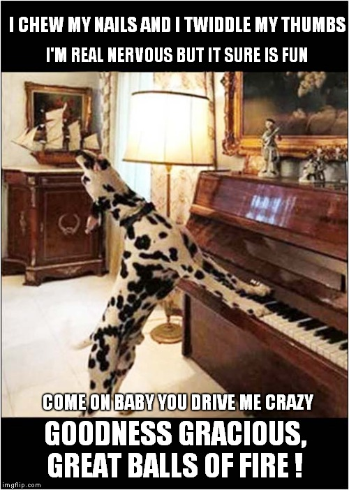 Jerry Lee Lewis Reincarated | I CHEW MY NAILS AND I TWIDDLE MY THUMBS GOODNESS GRACIOUS, GREAT BALLS OF FIRE ! COME ON BABY YOU DRIVE ME CRAZY I'M REAL NERVOUS BUT IT SUR | image tagged in fun,dogs,piano | made w/ Imgflip meme maker