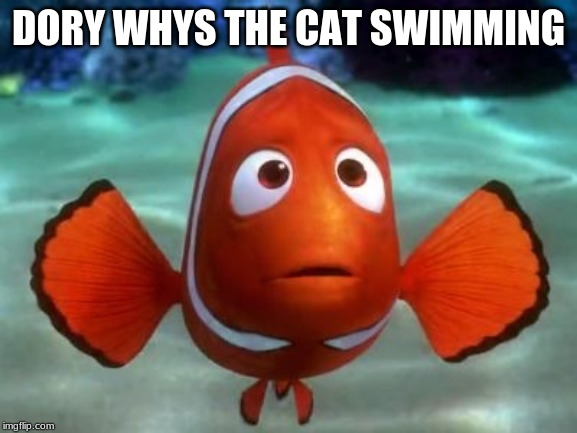 Scared marlin | DORY WHYS THE CAT SWIMMING | image tagged in scared marlin | made w/ Imgflip meme maker