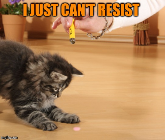 cat laser pointer | I JUST CAN'T RESIST | image tagged in cat laser pointer | made w/ Imgflip meme maker