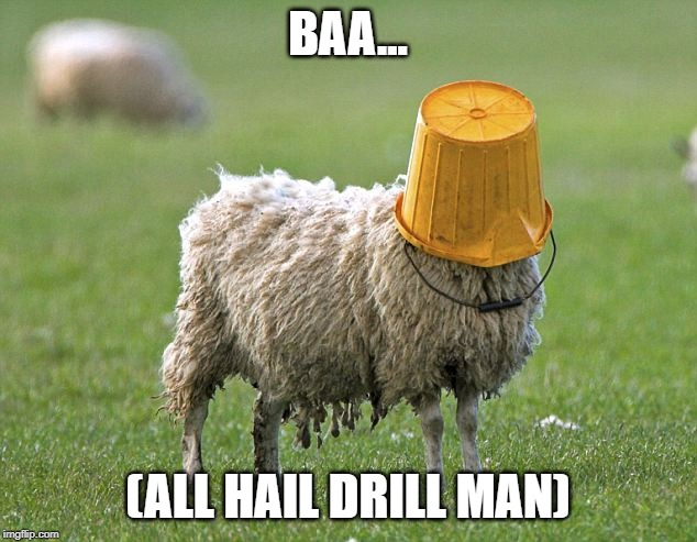 stupid sheep | BAA... (ALL HAIL DRILL MAN) | image tagged in stupid sheep | made w/ Imgflip meme maker