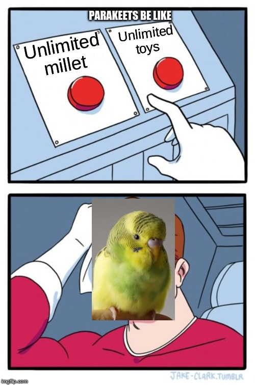 Two Buttons Meme | Unlimited millet Unlimited toys PARAKEETS BE LIKE | image tagged in memes,two buttons | made w/ Imgflip meme maker