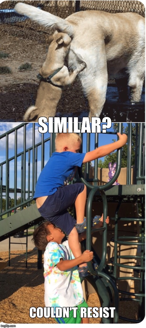 Kids vs dogs | image tagged in dogs,kids,playground,funny,butt,awkward | made w/ Imgflip meme maker