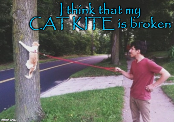 I think that my CAT KITE is broken | image tagged in cat kite | made w/ Imgflip meme maker