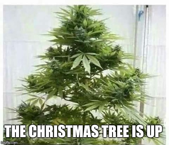And a happy New year | THE CHRISTMAS TREE IS UP | image tagged in memes,funny memes,christmas,420,weed,tree | made w/ Imgflip meme maker
