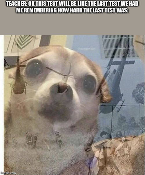 PTSD Chihuahua |  TEACHER: OK THIS TEST WILL BE LIKE THE LAST TEST WE HAD   ME REMEMBERING HOW HARD THE LAST TEST WAS: | image tagged in ptsd chihuahua | made w/ Imgflip meme maker