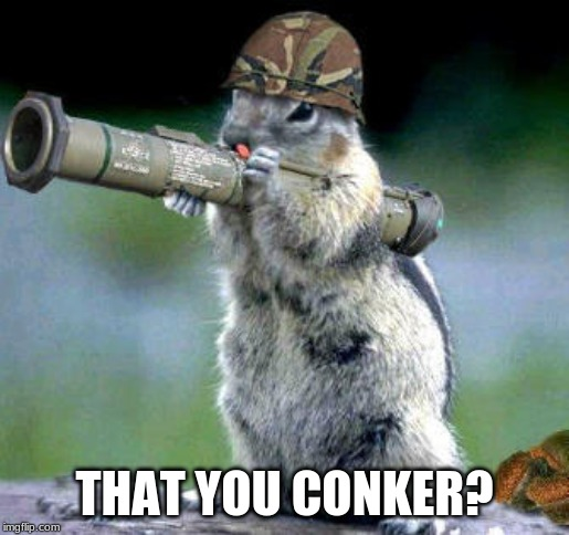 Bazooka Squirrel |  THAT YOU CONKER? | image tagged in memes,bazooka squirrel | made w/ Imgflip meme maker