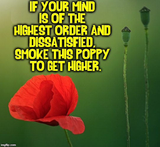 Your Love Keeps Lifting Me Higher | IF YOUR MIND IS OF THE HIGHEST ORDER AND DISSATISFIED, SMOKE THIS POPPY   TO GET HIGHER. | image tagged in vince vance,poppy,opiods,getting high,opium den,heroin | made w/ Imgflip meme maker