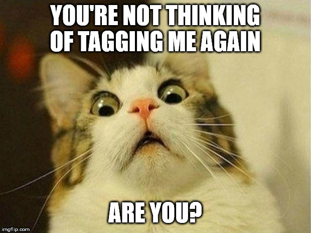 Scared Cat | YOU'RE NOT THINKING OF TAGGING ME AGAIN ARE YOU? | image tagged in tagging,facebook,cat | made w/ Imgflip meme maker
