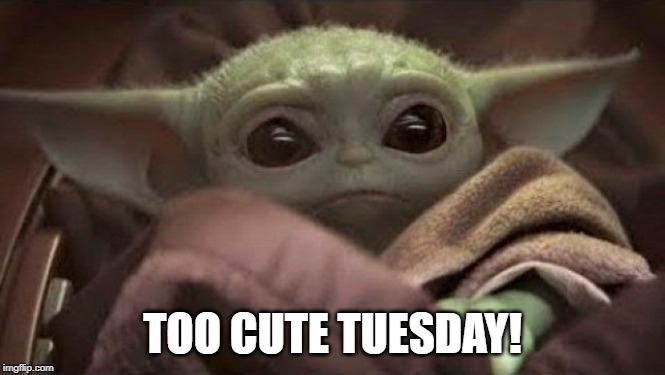 Image result for tuesday meme