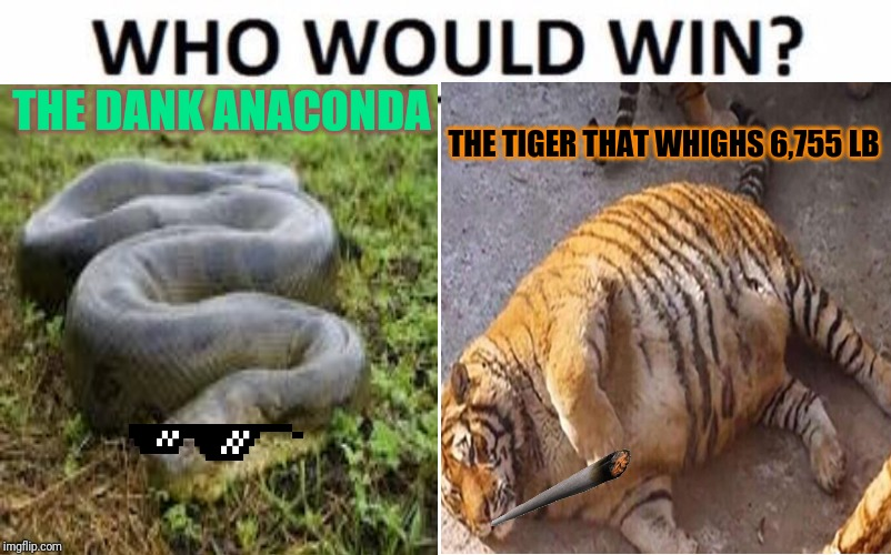Heavyweight championship |  THE DANK ANACONDA; THE TIGER THAT WHIGHS 6,755 LB | image tagged in who would win,dank memes | made w/ Imgflip meme maker