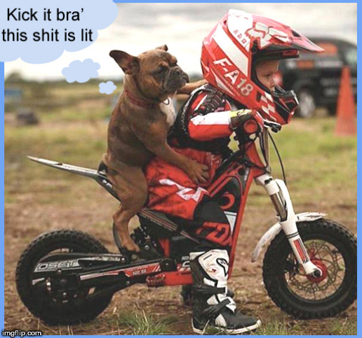This $hit is LIT................. | image tagged in lit,cute dogs,cute kids,lol,funny memes,motorbike | made w/ Imgflip meme maker