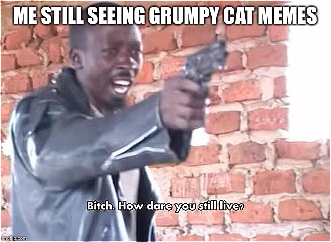 Bitch. How dare you still live | ME STILL SEEING GRUMPY CAT MEMES | image tagged in bitch how dare you still live | made w/ Imgflip meme maker
