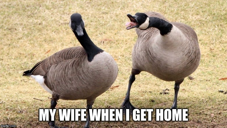 image tagged in geese,wife,angry | made w/ Imgflip meme maker