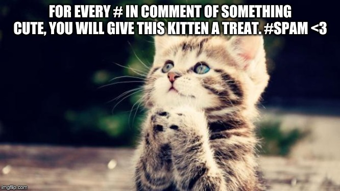 Example: hashtag Otter |  FOR EVERY # IN COMMENT OF SOMETHING CUTE, YOU WILL GIVE THIS KITTEN A TREAT. #SPAM <3 | image tagged in cute kitten,love,cute animals,hashtags | made w/ Imgflip meme maker
