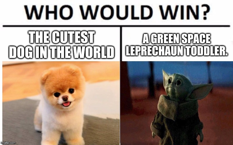 The Battle of Cuteness |  THE CUTEST DOG IN THE WORLD; A GREEN SPACE LEPRECHAUN TODDLER. | image tagged in boo the dog,baby yoda,cuteness overload,who would win,star wars,the mandalorian | made w/ Imgflip meme maker