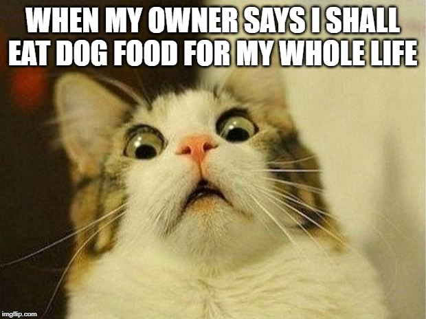 my cat | WHEN MY OWNER SAYS I SHALL EAT DOG FOOD FOR MY WHOLE LIFE | image tagged in funny animals | made w/ Imgflip meme maker
